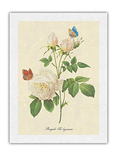Rose Blanche – Bengala de té himeado «Elección de las más bonitas flores» – ilustración botánica de Pierre Joseph temteado c.1833 – Papel de arroz con impresión artística 43 x 56 cm