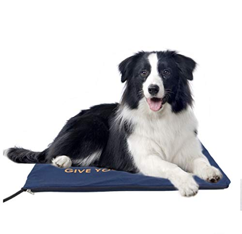 Can You Use Dog Pads for Cats?