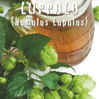 LUPPOLO (Humulus Lupulus) - SEMI