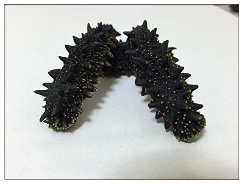 【北海道産】A級品乾燥なまこ 500g入 天然ナマコ (M(5-8g))