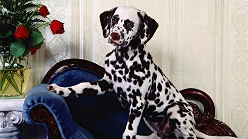 Puzzle 1000 Piezas Decoracion hogarena Rompecabezas Educativos Juegos de Bricolaje Brain Challenge Puzzle Sets regalo de Navidad Dalmata, silla, perro, florero, flor 75x50cm