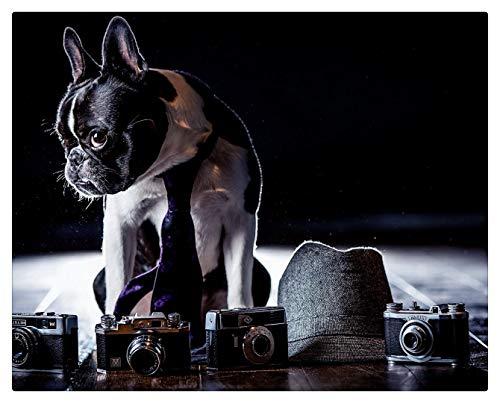 Pintar Por Numeros Adultos Pintura Al leo Sobre Lienzo Nios Con Pinceles Y Pigmento Acrlico De 40X50Cm (Marco De Madera) - Perro Disfraz De Bulldog