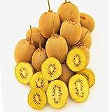 100 piezas / bolsa de semillas de kiwi amarillo Berry Actinidia deliciosa Kiwi Semillas Semillas Bonsai deliciosa de la fruta del jardín de DIY