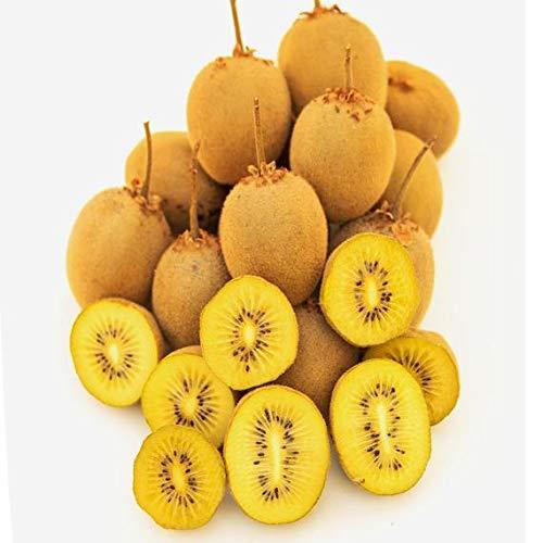 100pcs / Graines sac jaune Kiwi Berry Actinidia Deliciosa Kiwi Seeds Délicieux Fruit Bonsai Graines bricolage jardin