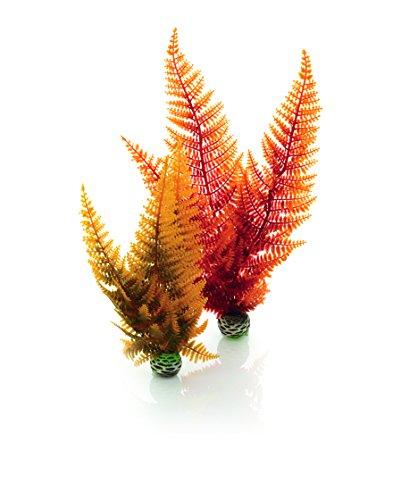 biOrb Plantes Colorées Moyennes Automne