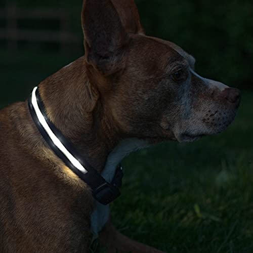 Blazin' Safety LED Dog Collar – USB Rechargeable with Water Resistant Flashing Light, Medium, Black