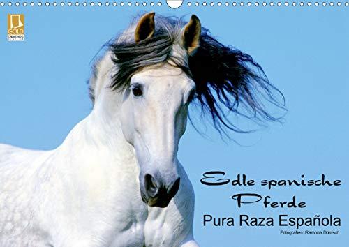 Edle spanische Pferde - Pura Raza Espanola (Wandkalender 2021 DIN A3 quer)
