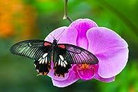 蝶と胡蝶蘭1000ピースジグソーパズル 木製ジグソー脳チャレンジ