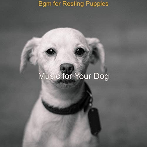 Music For Your Dog