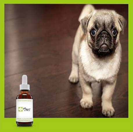 """Mélange Fleurs de Bach""""Chien stressé"""", Réconforter rapidement votre chien.Ceci est un anti stress naturel pour son quotidien (10ML)"""