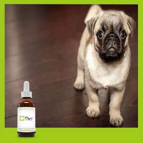 Mezcla de flores de Bach «perro estresado», reconforta rápidamente a tu perro. Es un antiestrés natural para su uso diario.