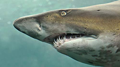 Lsping giochi Bambina Femmina 500 pezzi Tiburones Mundo Submarino Animales 52x38cm