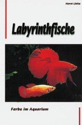 Labyrinthfische. Farbe im Aquarium
