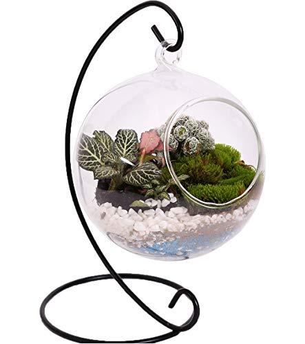 10L0L Charming Clear Glass Ball Vase Air Plant Terrarium / Succulent Flowerpot Container