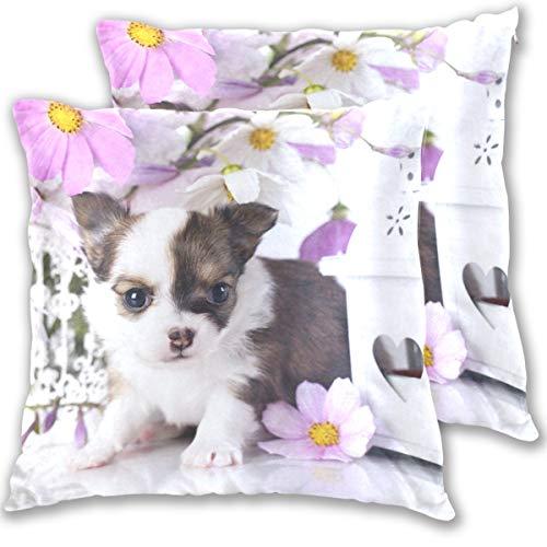 SAIAOS Fundas de Cojín Paquete de 2 Perros Chihuahua Cachorro Animales Bebé,Decorativa Impreso Caso de Almohada Cuadrado Fundas de Almohada para Sofá Coche Cama 60x60cm