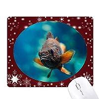 小型熱帯魚の海の生物 オフィス用雪ゴムマウスパッド