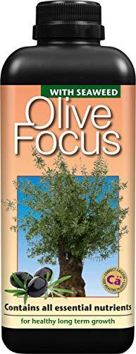 Olive Focus Fertilizer formulated precisely for olive trees