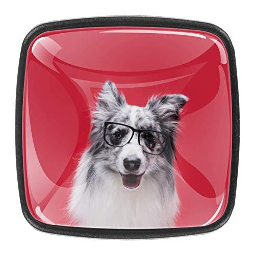 (4 piezas) pomos para armario de cocina, tiradores de cajón de cristal, tiradores de cajón para casa, oficina, dormitorio, sala de estar, baño con tornillos, lindos bordes Collie Dog