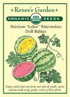 "Watermelon, Icebox, ""Doll Babies"" Heirloom - Certified Organic Seeds"