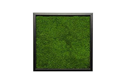 Moosbild Pflanzenbild Wandbild mit Flachmoos, versch. Maße günstig (100{35b8d8f86cf7eee87cfb881f8de94648b420cff9797cc0f12b3cbb22ecd68fa4} Flachmoos) (Schwarz, 85x85 cm)
