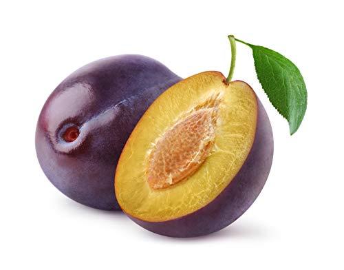 """1 Pflaumenbaum\""""Wangenheimer Frühzwetsche\"""" 120-150cm im Topf Obstbaum Pflaume Prunus domestica + Dünger für die Jahresdüngung"""