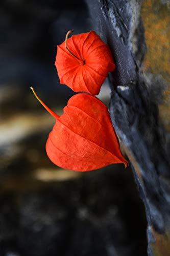 Physalis Alkekengi Chinese Lantern Flower Journal: Take Notes, Write Down Memories in this 150 Page Lined Journal
