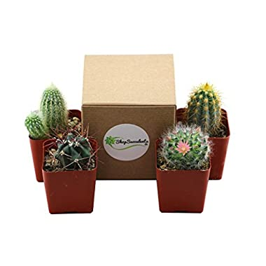 Shop Succulents Pack of Assorted 2.5  Cactus (4)