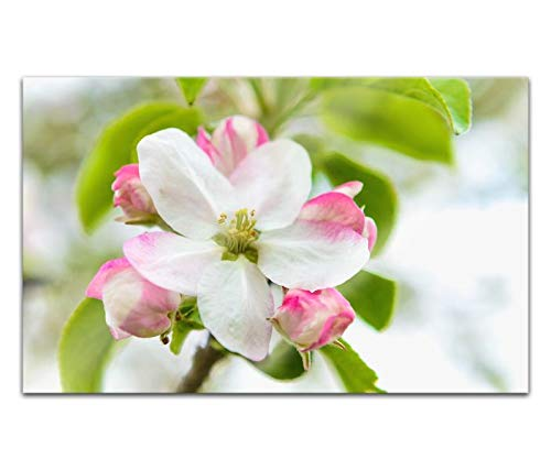 Acrylglasbilder 80x50cm Kirsche Blume Baum Blüte rosa weiß Pflanze Acryl Bilder Acrylbild Acrylglas Wand Bild 14H1790