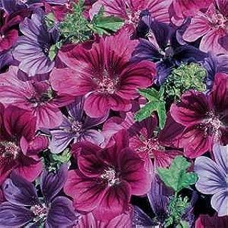20+ Malva Sylvestris Mystic Merlin Flower Seeds / Perennial