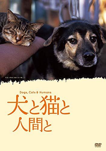 映像グループ ローポジション『犬と猫と人間と』