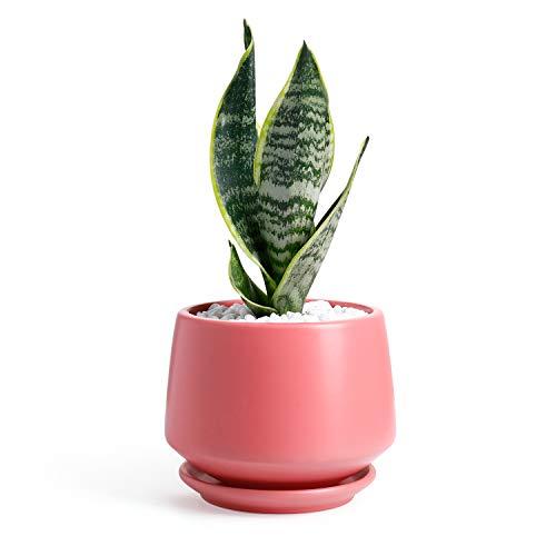 Potey Keramik-Blumentopf für den Innenbereich, mittelgroß, 15 cm, Abflussloch mit Untersetzer, für Blumen, Kräuter, afrikanische Veilchen Modern Koralle matt