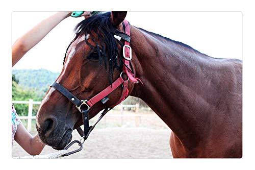 LESGAULEST Doormat Floor Rug/Mat (23.6 x 15.7 inch) - Horse Trim Comb Horse Brushing A Horse Brown Horse