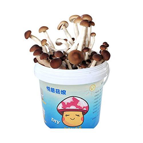 Rowe Kit de Cultivo mágico de Setas, Semillas de champiñones orgánicos para Interiores esporas para Cultivar Kits de Crecimiento, Crecen su Propio Kit de árboles bonsái