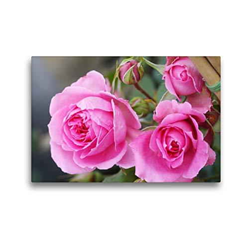 Premium Textil-Leinwand 45 x 30 cm Quer-Format Rosa 'Parade' | Wandbild, HD-Bild auf Keilrahmen, Fertigbild auf hochwertigem Vlies, Leinwanddruck von Gisela Kruse