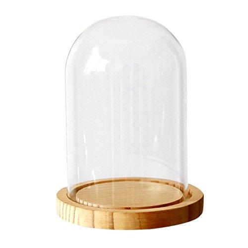 ivolador cristal campana cúpula con base de madera oficina decoración del hogar