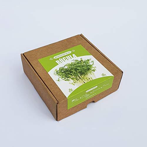 Garden Pocket Microvegetales Pop UP - Kit de Interior de germinados de Semillas ecológicas x3 (Rúcula)