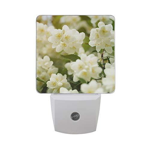 AOTISO Jasmine Flowers Blossom in Sunshine Summer Day Auto Sensor Night Light Plug in Indoor