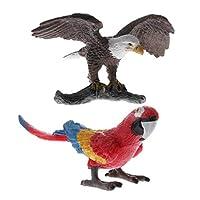 動物モデル オウム ワシ模型 フィギュア おもちゃ