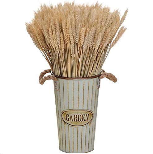 Chytaii - 100 flores de trigo secas, flores de trigo secas, flores de trigo secas, hierbas de trigo...
