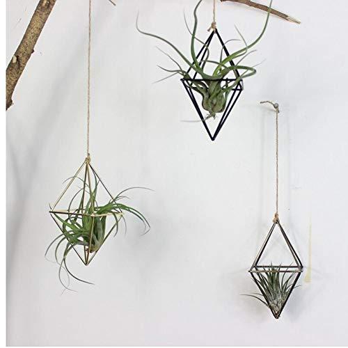 Plantas Colgantes Tillandsia Aire Rejilla de Metal geomé