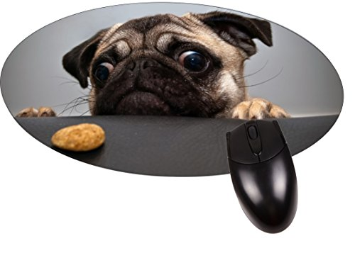 Price comparison product image Pug Wants a Cookie- Round Mouse pad - Stylish,  Durable Office Accessory Made in the USA
