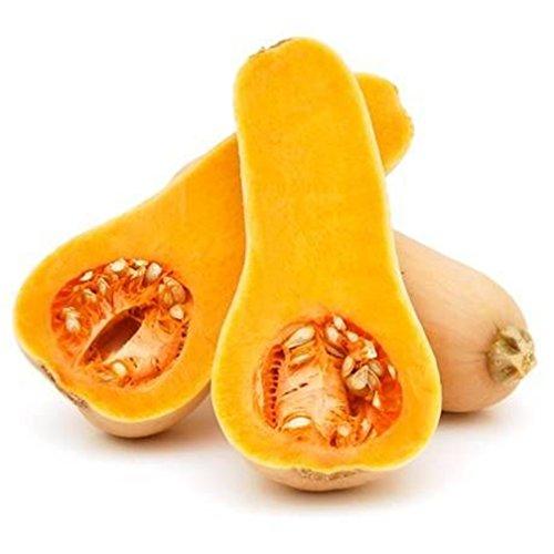 Courge musquée citrouille non OGM légumes 10 Pcs Les semences