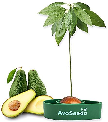 Avoseedo das Besondere Garten Geschenke - Pflanzen Sie Ihren Eigenen Avocadobaum. Kleine Geschenke Für Frauen Und Männer. Die Neue Klein Dekoration Für Ein Schöneres Zu Hause. Das Komplette Pflanz Set