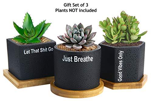 Clever Yoga Sukkulentententopf| Kaktus-Topf| 7 cm| schwarzer Beton| für Sukkulenten| Kräuter| Mini-Blumen| Pflanzen| Drainage| Bambus-Tablett| 3 Stück| tolles selbstpflegendes Geschenk für Zen | Dekoration > Dekopflanzen > Pflanzen | Clever Yoga
