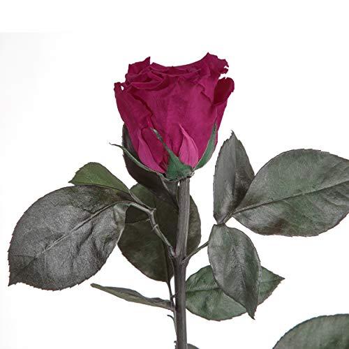 Duftrose infinity Rose 3 Jahre haltbare Rose konservierte die eine Ewigkeit blüht (Pink)