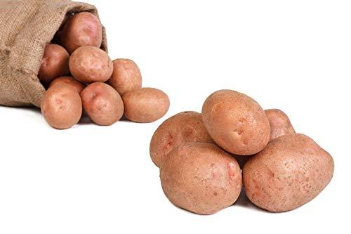 FRUCHTVERSAND24® Kartoffeln Laura (Speisekartoffeln) 25kg