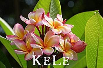 VISTARIC 11: 50 Stück/Beutel, Amaryllis Samen, Topf Samen, Blumensamen, die komplette Vielzahl, die angehende Rate 95%, (Mischfarben)