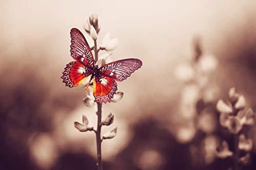 Bilderdepot24 Fototapete selbstklebend roter Schmetterling - Vintage 100x65 cm - Wandposter Tapete Motivtapete - Tier Tierbild Natur