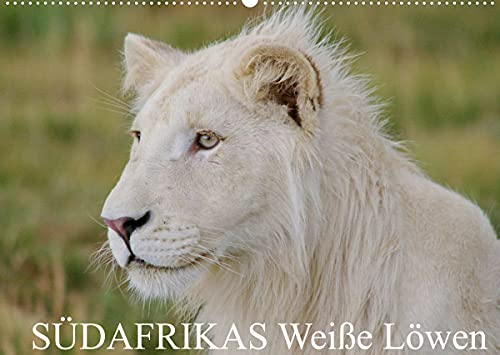 South Africa White Lions Wall Calendar...