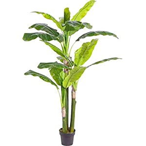 AMERIQUE Gorgeous 5.7′ Musa Basjoo Banana Tree Artificial Silk Plant with UV Protection, with Nursery Plastic Pot, Feel Real Technology, Super Quality, Feet, Green